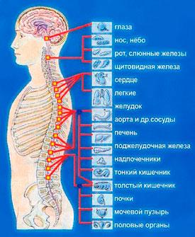 Боли в сердце при остеохондрозе: причины и лечение
